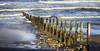 Coastal cormorants (Gill Stafford) Tags: gillstafford gillys image photograph wales northwales conwy abergele pensarn llanddulas breakers groyne sea coast wild coastalpathway welsh birds cormorants chicks young