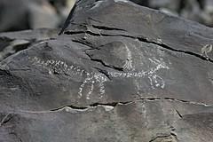 Petroglyph / Little Lake Site (Ron Wolf) Tags: anthropology archaeology littlelake nativeamerican dog petroglyph ringtail rockart zoomorph inyocounty california