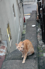 Stray Cat II (Ethicalicious) Tags: stray cat humane food meow cats portrait eyes hong kong mid levels animal pet