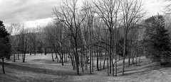 Trees in the Crease - bw (Joe Josephs: 2,861,655 views - thank you) Tags: westvirginia landscape landscapephotography outdoorphotography blackandwhitephotography blackandwhite alleghenyriver americana america rural rurallandscape water waterreflections trees fineartphotography fineartprints joejosephsphotography joejosephs travelphotography travel