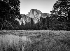 Opt Outside (Channeling Ansel Part II) (Geoff Livingston) Tags: rei nationalpark service yosemite halfdome mountain anseladams optoutside consumerism grass trees fypx find your park