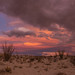 Ocotillo and colorful desert sunset