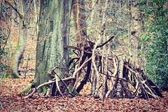 Den in the woods (cypriotliljoe) Tags: den autumn woods wood branches sticks tree trees