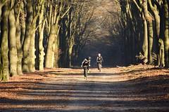 Come on! (alokD7200) Tags: bike veldrit fiets biking bos race woods december december2016 veluwe gelderland daylight daytime nederland netherlands holland sport sports hobby nikkor nikon nikond7200 7200 d7200 sun light shadow schaduw tree trees bomen laan