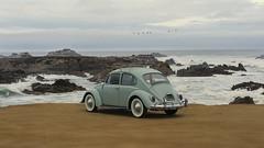 I Took Baby to the Beach (Jason.Chenoweth) Tags: volkswagen beetle vw bahamablue 1965 car bug beach asilomar pinos pointpinos ptpinos classiccar whitewalls vintage vintagecar oldbug classicvw