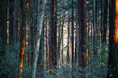 cw-Forrest (CristalArt) Tags: canon eos 6d digital photography wood forrest landscape macro lens