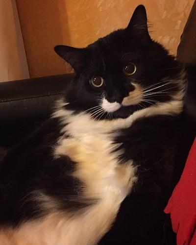 🐈 #Бублик #кот #котэ #протвино #мо #cat #bublik #чернобелый #pet
