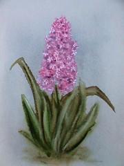 Hyacinthus (Svetlana Kalcheva) Tags: painting flower flowers graphics spring hyacinthus watercolors