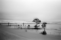 Fraser Island - Ilford Delta 100 film (Ric Capucho) Tags: sky water sea beach blackandwhite riccapucho contax contaxt2 film analog analogue 35mm 50mm ilforddelta100 grain switzerland zurich black white bw candid decisivemoment creativecommons flickr flickriver scout primelens lefteyed skancheli snap photography portrait unposed tog