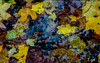 Rain season start 雨季來臨 (T.ye) Tags: fall rain yellow vancouver landscape leafs 楓葉 黃色 秋雨