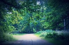 Ashridge Estate, Herts.  (Masakino Fuquini) Tags: wood uk summer england colour green nature forest countryside walk country july berkhamsted  nationaltrust   hertfordshire ashridge       2013
