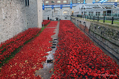 Blood Swept Lands & Seas Of Red (DSW Photography) Tags: uk red england london art public ceramic moving respect visit poppy poppies stunning tribute ww1 moat crowds toweroflondon rememberanceday seaofred seaofpoppies paulcummins dswphotography bloodsweptlandsandseasofred ceramicpoppies