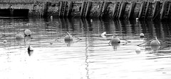 """marking time"" Monochrome harbour (Margaret Preuss-Higham) Tags: water harbour peaceful ropes buoys ladders westbay"