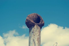 Hornero (laurw) Tags: nest nido hornero