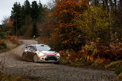WRC WALES RALLY GB 2014 (CITRON) Tags: world auto november car sport wales finland championship novembre rally citroen du racing des wrc terre monde rallyes gravel rallye motorsport rallying championnat paysdegalles ds3wrc