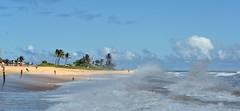 8DS_8784 (richnew7) Tags: sea beach sports water hawaii big nikon surf waves oahu surfer sandy surfing swell d600