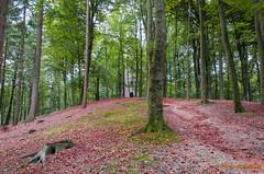 park Sonsbeek Arnhem (www.petje-fotografie.nl) Tags: bomen arnhem herfst paddestoelen sonsbeek bladeren