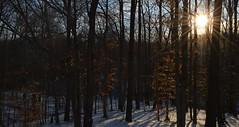 Winter 012 (Nathan_Arrington) Tags: blue trees winter light snow nature beauty nova lines weather forest sunrise landscape golden virginia shadows seasonal va woodbridge northernvirginia lakeridge arboreal princewilliamcounty