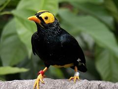 nEO_IMG_100_1529 (samuel_wkip) Tags: bird hongkong kodak central hongkongpark hongkongparkaviary kodakz990 z990 hongkongpark香港公園 hongkongparkaviary香港公園觀鳥園