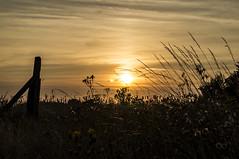 Zempin Sunset (OnkelKrischan) Tags: deutschland abend sonnenuntergang wiese himmel dämmerung usedom zempin achterwasser