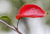 Red Leaf (JVierno77) Tags: new york ny canon island staten 100mm28macro 60d wwpw2014