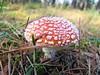Muchomor (Nondenim) Tags: trees forest poland polska toadstool roztocze explorewinnersoftheworld thebestofmimamorsgroups
