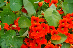 DSC_6877 (sir.yoga) Tags: flowers bratsk easternsiberia