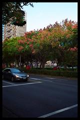 autumn, Taipei 2014 (Morris Chiang) Tags: leica 24mm asph f28 x2 elmarit 2428 leicax2