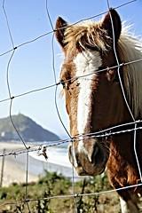 talaia bidea (Unai Huizi) Tags: caballo mar san sebastian pedro pony otoo monte gros potro ulia gipuzkoa itsasoa udazkena behorra talaia
