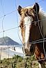 talaia bidea (Unai Huizi) Tags: caballo mar san sebastian pedro pony otoño monte gros potro ulia gipuzkoa itsasoa udazkena behorra talaia
