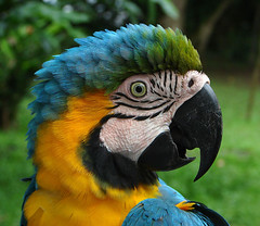 taxonomy:family=psittacidae taxonomy:binomial=araararauna taxonomy:common=blueandyellowmacaw geo:lat=3858 geo:long=7054