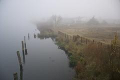 foggy morning in November (Jualbo) Tags: november autumn fog river germany deutschland nebel herbst foggy fluss rostock vorpommern mecklenburg 2014 nebelig warnow