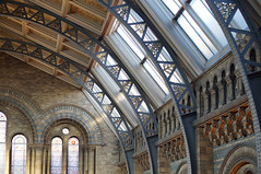 Natural History Museum {300:365} (Conanetta) Tags: building london architecture october ceiling 365 naturalhistorymuseum infocus 2014 highquality hpad