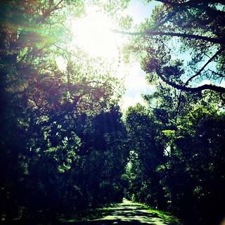 365/278 • on the way to karate • #2014_ig_278 #karate #redhill #ontheroad #sunshine #morningtonpeninsula