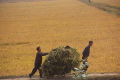2014 Oct North Korea trip DPRK  (2432) (Lawrence Wang 王治钧) Tags: trip korea korean northkorea nk pyongyang dprk 朝鲜 northkorean 平壤 北朝鲜 北韩