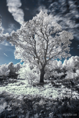 "Infrared dream • <a style=""font-size:0.8em;"" href=""http://www.flickr.com/photos/29952986@N05/15576659402/"" target=""_blank"">View on Flickr</a>"