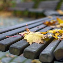 Leaf (MR.MOBE) Tags: park autumn bench leaf sony hst benk lv strmmen a6000 sel35mmf18