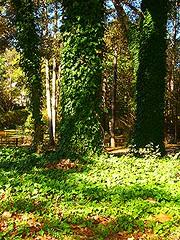 Woods (mdownes7) Tags: woods edited space final atmospheric
