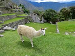 Machu Picchu-189