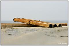 Camperduin Petten (jan_vrouwe) Tags: sea beach gull dunes dune wave seal seals dike breakwater callantsoog petten