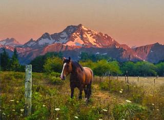 Lone Horse in Pasture
