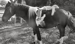 Un partage  cheval (vavie2012) Tags: horse naturaleza nature caballo cheval child unity union joy juegos games calm nios sharing felicidad harmless enfant bonheur plaisir hapiness tranquille partage unin tranquilidad compartir jeux agusto crinire inoffensif inofensivo