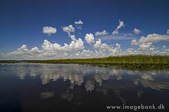 Everglades Wetland (Max Michel Mann) Tags: park wild sky lake reflection green nature water sunrise river landscape outdoors nationalpark colorful florida wildlife swamp wetlands everglades marsh wilderness wetland