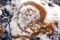 IMG_3465 guld i marmor (I appreciate all the faves and visits many thanks) Tags: nature natur skandinavien sverige gotland sten scandinavia guld canoneos50d fr solveigsterschrder skrsnde