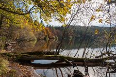 Lac du Bouchet (aups83) Tags: nature automne lac auvergne volcan pêche baignade hauteloire randonnéepédestre plandeau pêcheàlamouche cayres lacdubouchet plateauvolcanique