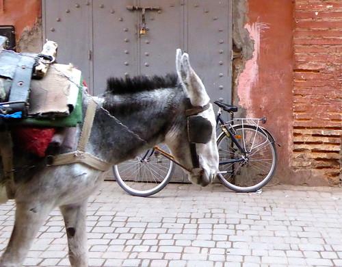 Mule cycle