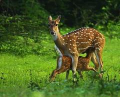 Mammals in Sri Lanka