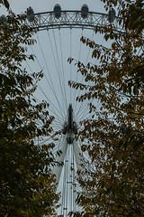London Eye (Cissa Rego) Tags: uk england urban london nikon d70s streetphotography housesofparliament londoneye bigben nationalgallery clocktower poppies remembranceday urbanphotography ferryswheel