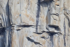 7D2_6027_BlueClimber_ElCap_DPP (SF_HDV) Tags: california yosemite yosemitenationalpark elcapitan rockclimbing wallclimbing yosemitevalley 7dmarkii ef600mmf4lisiiusm canon7dmarkii canon7dmark2 7dm2 7dmark2
