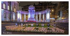 Belfast Cenotaph (D.K.o.w) Tags: belfast cenotaph poppies poppy remembrancesunday nightshot belfastlandmarkcityhall belfastcityhall greatwar northernireland ulster lestweforget crosses canon7dmkii